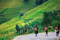 Vietnam ethnic and rice terrace field